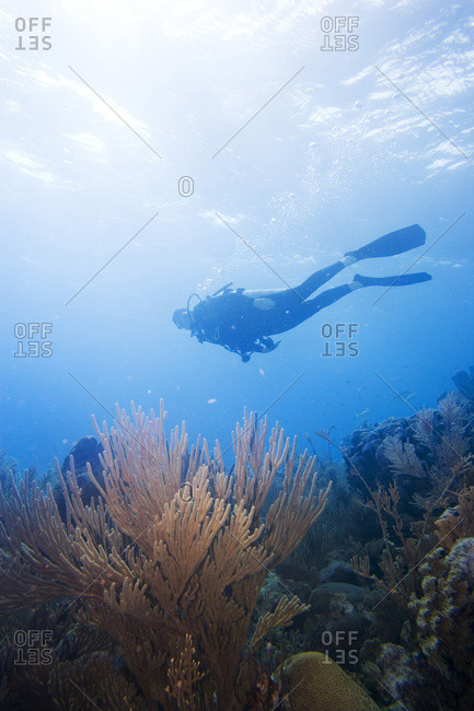 Person scuba diving above patch reef near Long Caye, Glover's Reef Atoll, Belize