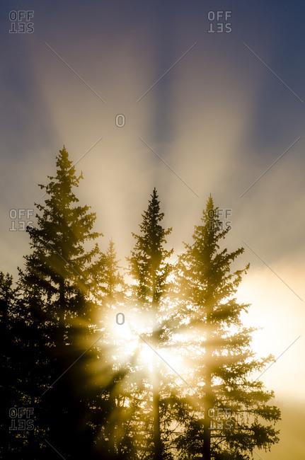 Light shining through trees and fog creating God rays  Jackson Hole, Wyoming