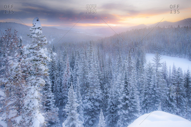 Snow covering evergreen trees and Bear Lake in Rocky Mountain National Park