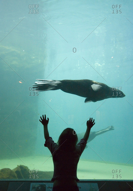 Young girl watching a sea lion swimming