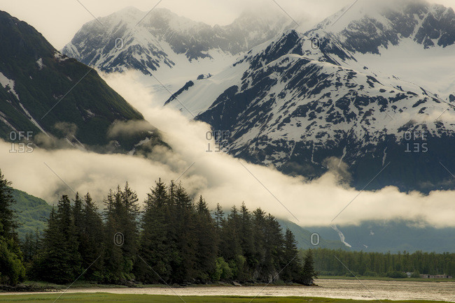 Evergreens, mist and mountains in Valdez, Alaska, USA
