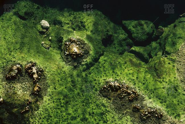 Blue green algae in Waimangu Valley Thermal area, New Zealand
