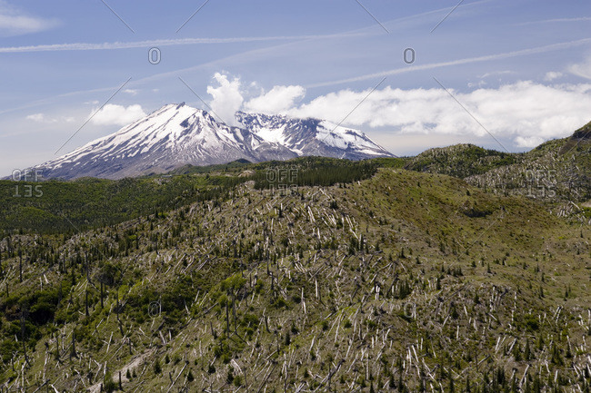 View of Mt. St. Helens and dead trees affected by the blast in Washington, USA