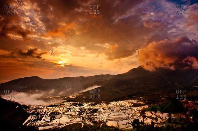 Rice field in Yuanyang, Yunnan, China