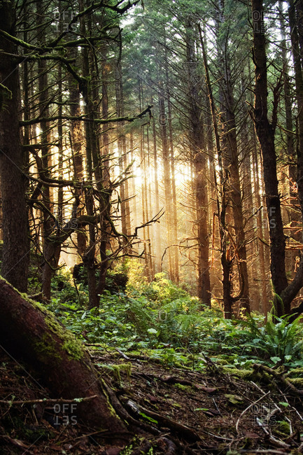 Light streaming through the forest