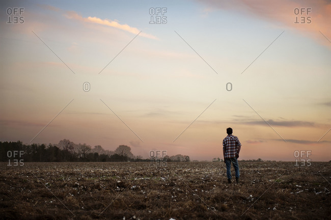 Back view of man standing in a cotton field at sunset