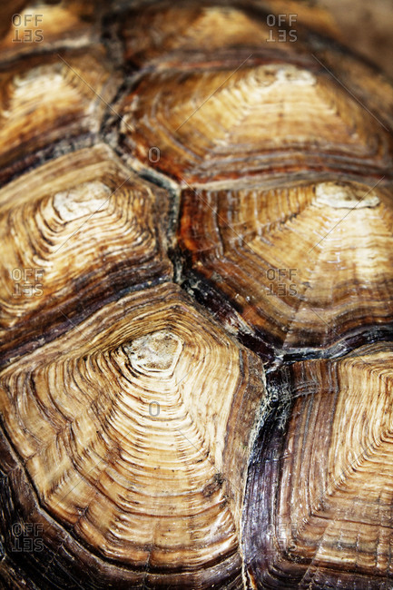 Close up of a turtle shell