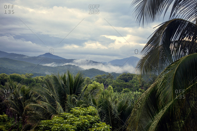 Landscape of South American rain forest