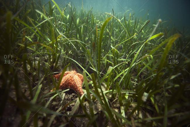 Starfish on the bottom of the sea