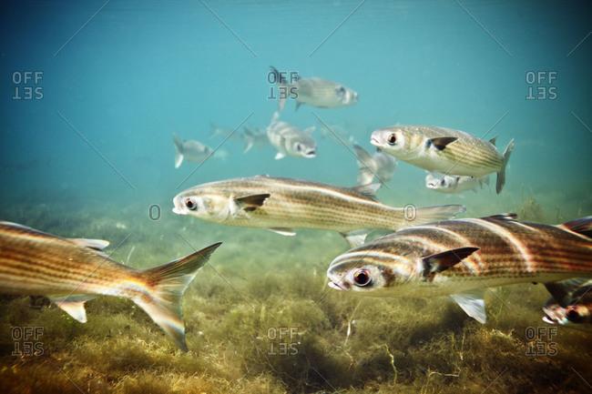 School of fish swimming in the sea