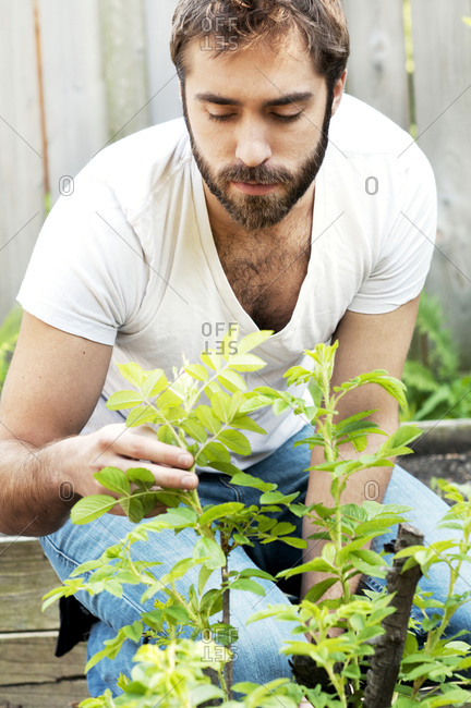 Man looking at plant in garden
