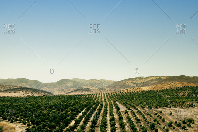 View over a vineyard in Aconcagua Wine Valley