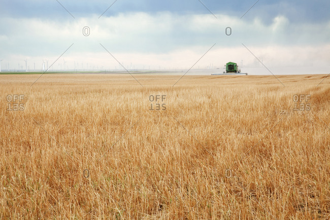 A harvester combine drives through a field