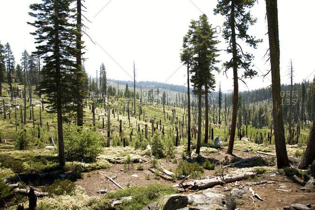 Regrowth at Yosemite National Park