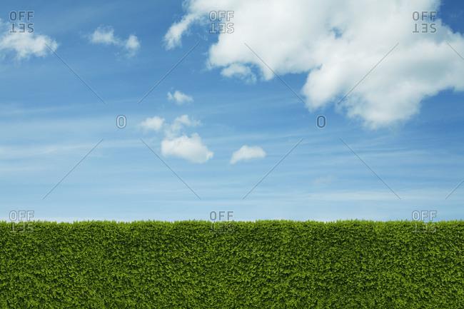 Green hedge under blue sky