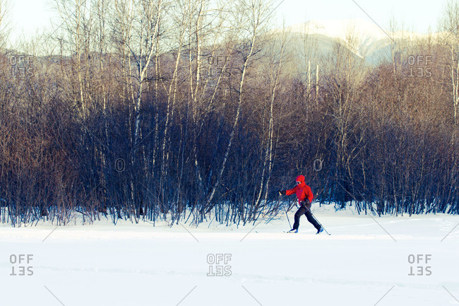 Cross country skier by woods