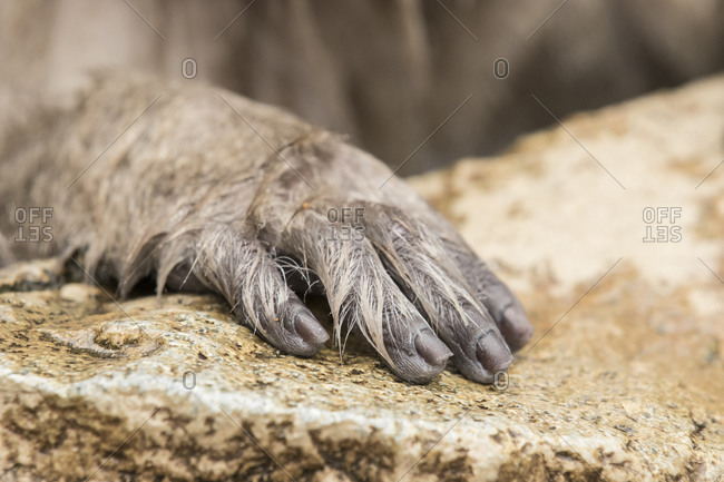 The hand of a macaque