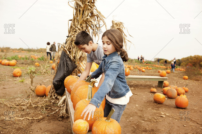 Brother and sister arranging pumpkins in patch