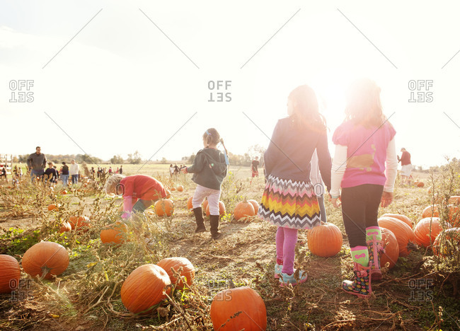 Girls looking for pumpkins in patch