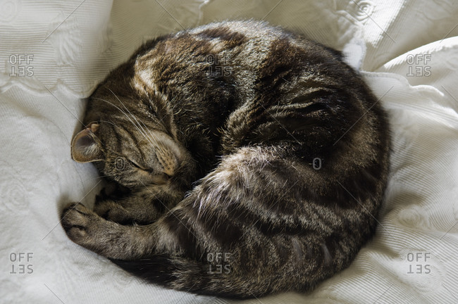 Top view of cat curled up on a bed