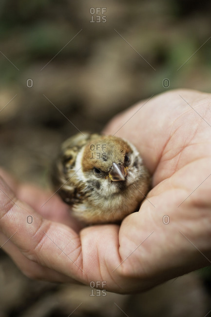 Man holding a sparrow in his palm