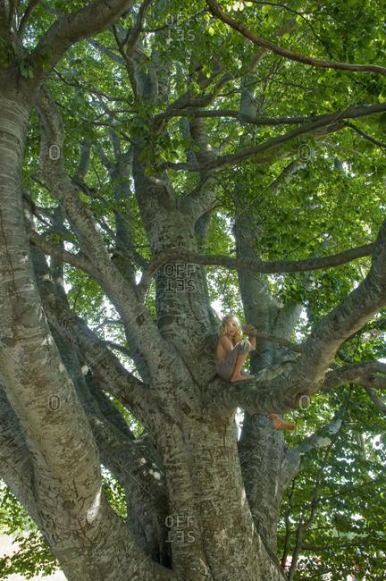 Boy sitting on a tree branch