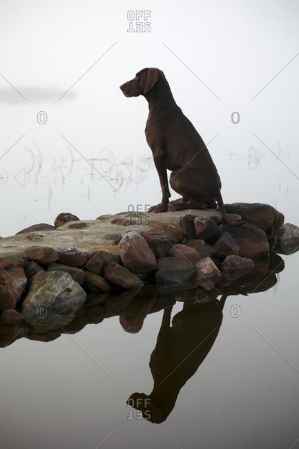 Dog sitting on a coast