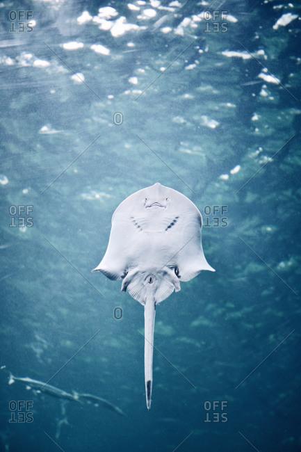 Low angle view of a stingray
