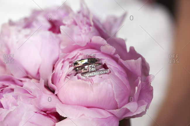 Close up of wedding rings on a pink peony