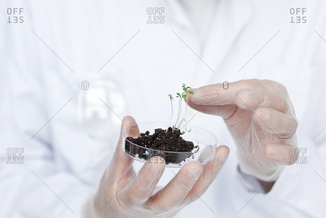 Person holding a seedling in a petri dish