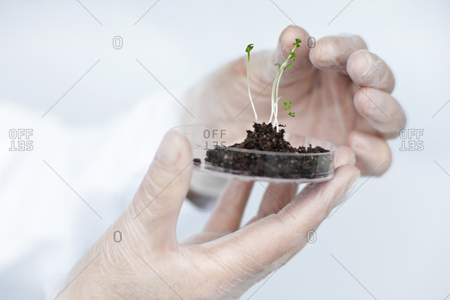 Scientist holding a seedling in a petri dish