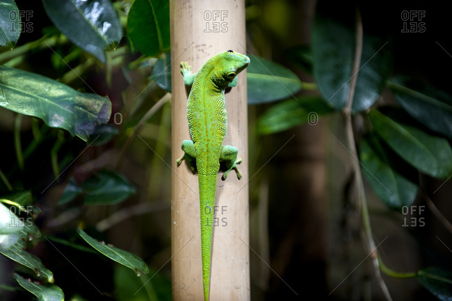 Gecko on a tree trunk
