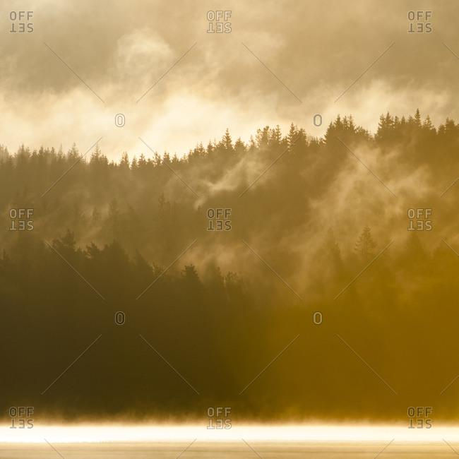 Swedish forest at sunrise - Offset