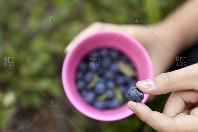 Person picking blueberries