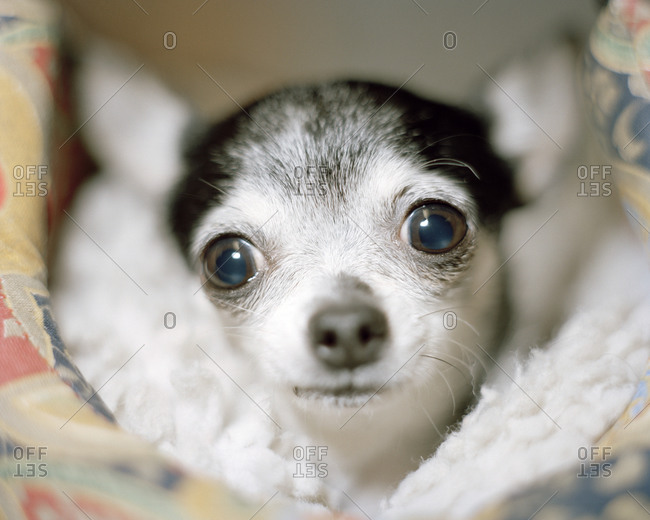 Close up of a small dog