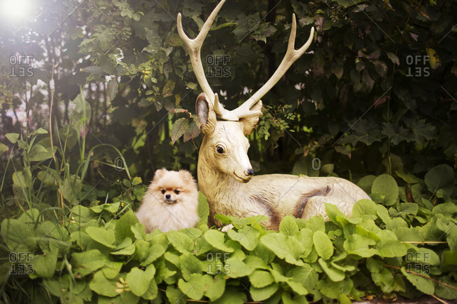 Dog sitting next to a plastic deer