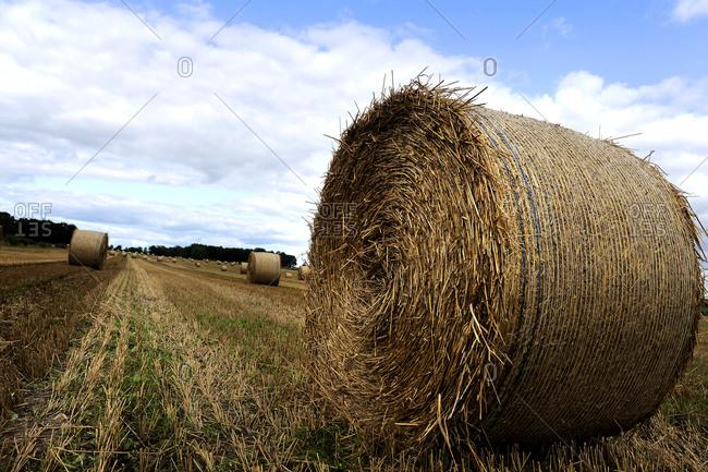 Bale of hay in a field