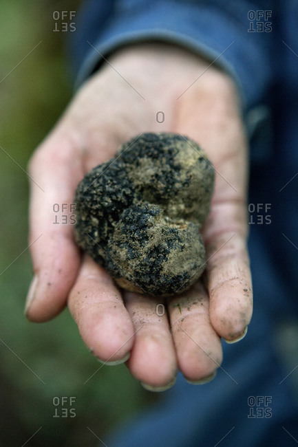 Person holding a handful of truffle