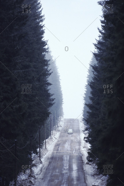 A car on a road in a forest