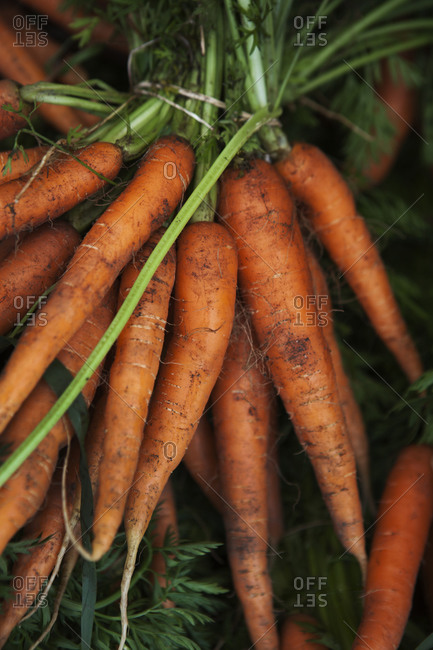 Close-up of bunch of carrots