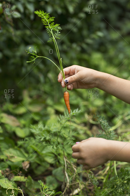 Child holding a baby carrot