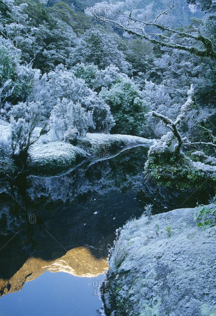 Snow covered plants by stream