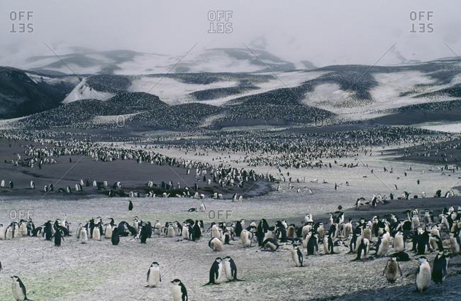 Penguins in open land