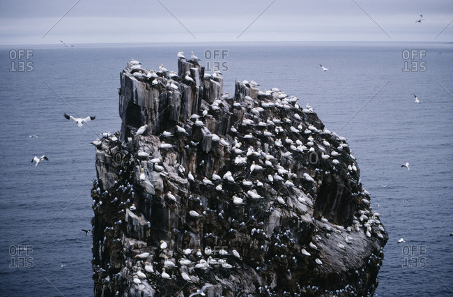 Bird colony on rock