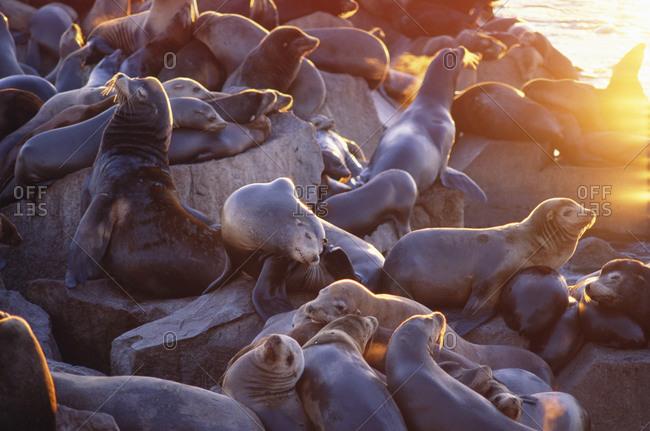 Seals relaxing on rock