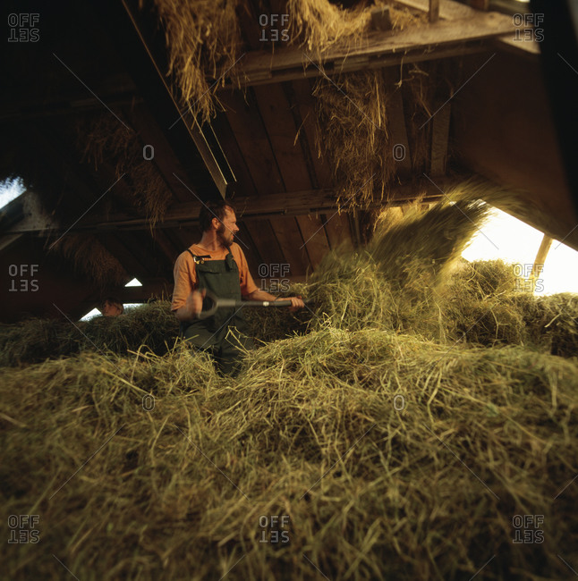 Man working in cowshed