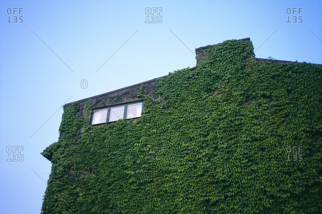 Window on a house with ivy