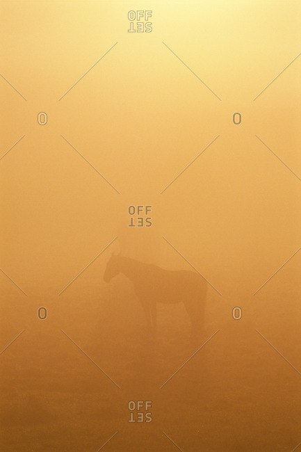 Silhouette of horse in mist