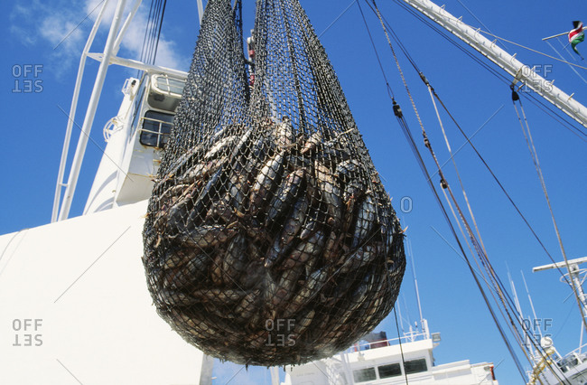Fish in a net hanging on a boat