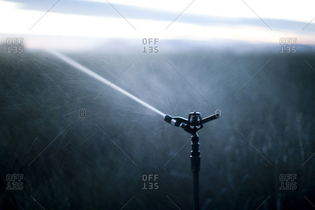 Close up of sprinkler irrigating onion field